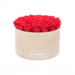 EXTRA LARGE BLUMMIN NUDE VELVET BOX WITH VIBRANT RED ROSES