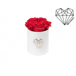 MIDI LOVE - WHITE VELVET BOX WITH VIBRANT RED ROSES