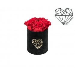 MIDI LOVE - BLACK VELVET BOX WITH VIBRANT RED ROSES