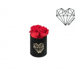 XS LOVE - BLACK VELVET BOX WITH VIBRANT RED ROSES