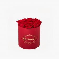 MEDIUM BLUMMiN - punane karp VIBRANT RED roosidega