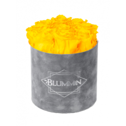 MEDIUM BLUMMiN - helehall sametkarp YELLOW roosidega